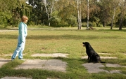 Дрессировка и хендлинг собак