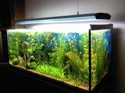 Обслуживание пресноводных аквариумов