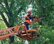 корчевание деревьев , пней и спил деревьев