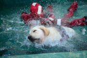 Дрессировочный центр SMART-DOG Одесса Гостиница для собак Дрессировка