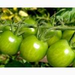 Продам зеленый помидор Опт.