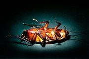 Эффективное уничтожение тараканов и клопов