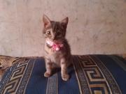 подарим хорошим отзывчивым людям, котенок девочка, приблезительно 3 неде
