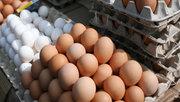 Куплю куриное яйцо в большом количестве