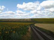 Земельный участок в аренду под выращивание зерновых в Одессе,  пай -  10 га