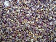 Продам семена чеснока - воздушку