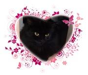 персидская черная кошечка в добрые руки-даром - Кошки, котята