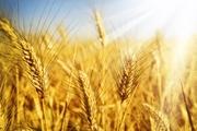 Продам в Одессе зерно комплекс участок 3 га с Ж/Д,  есть причал.